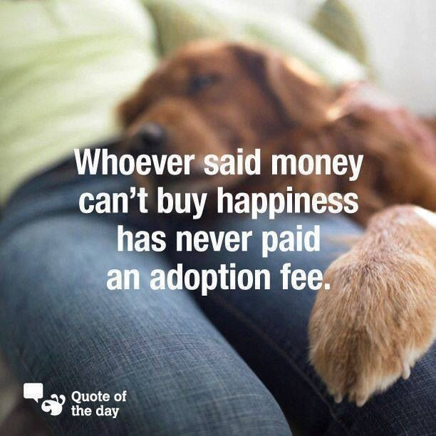 why adopt from an animal shelter essay Learn 12 reasons why you should adopt a pet from an animal shelter - survey shows that over half of pet owners want their next pet to be a rescue dog or cat.