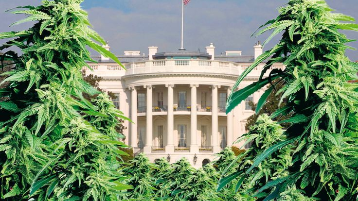This article by Jay Syrmopoulos was originally published by thefreethoughtproject.com.    Washington, D.C. – In an effort to push back against repressive federal control of marijuana policy, bipartisan legislation was introduced in Congress by representatives Tom Garrett (R-VA) and