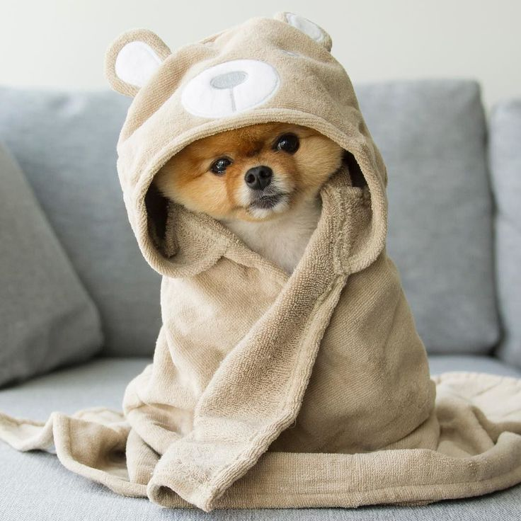 Es el mi perro.