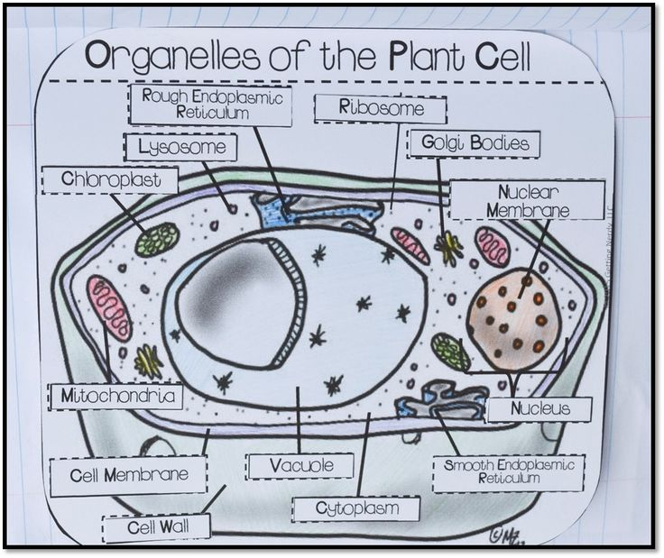 60 Best images about sciences on Pinterest : Cell ...