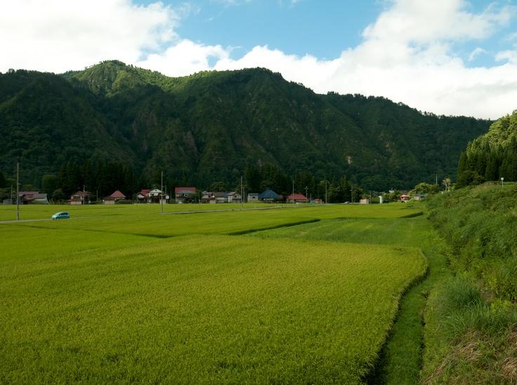 Summer 2012 (Kaneyama, Fukushima, JAPAN/2012.08)