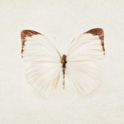 Wings, Eye Poetry Photography