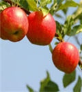 an online nursery selling all sorts of trees and fruit trees at great prices!