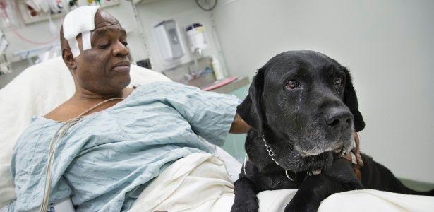 """Veja 8 cães que realmente podem ser chamados de """"melhores amigos do homem"""""""