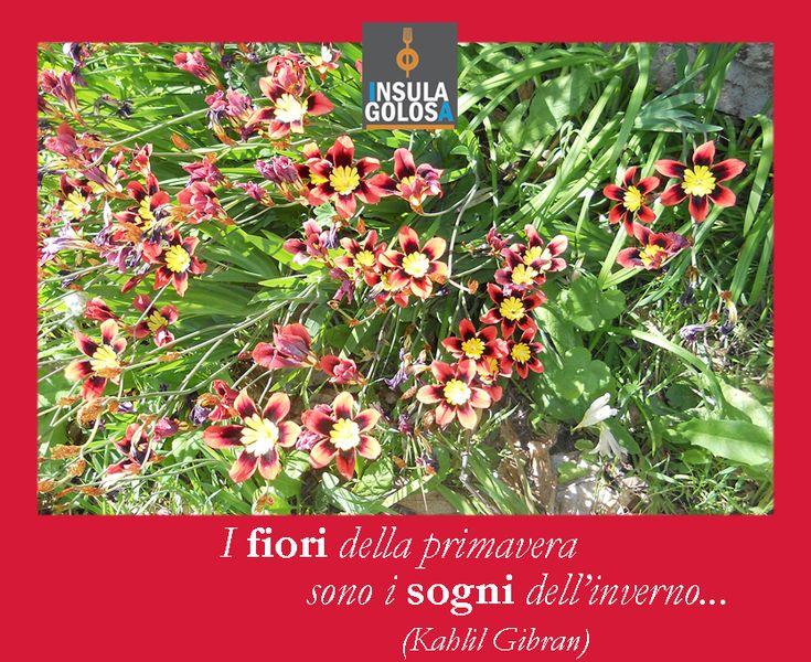 I fiori della primavera sono i sogni dell'inverno (Khalil Gibran )