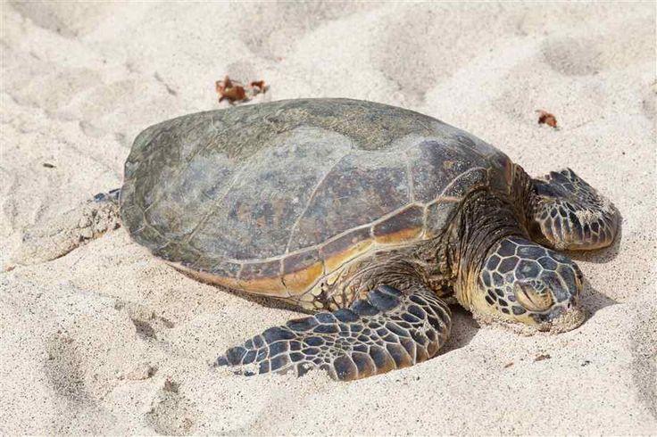 WWF per le tartarughe