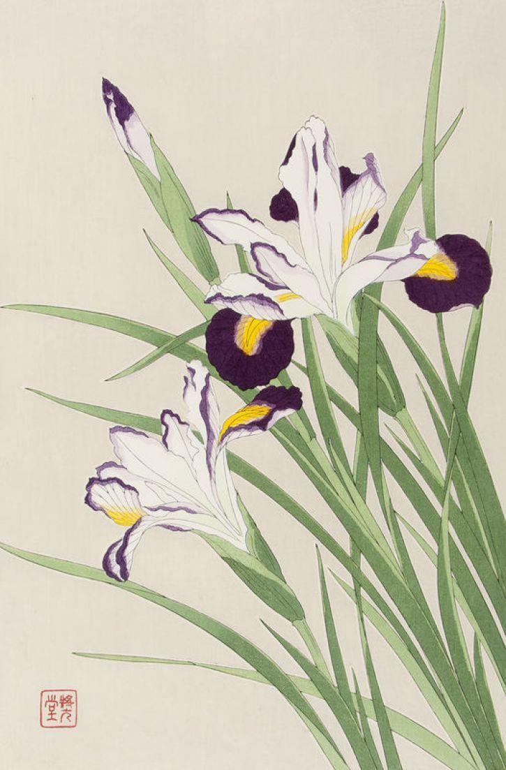 "Shodo Kawarazaki (Japan, 1889-1973) - ""Iris"" - Woodblock print (20th century)"