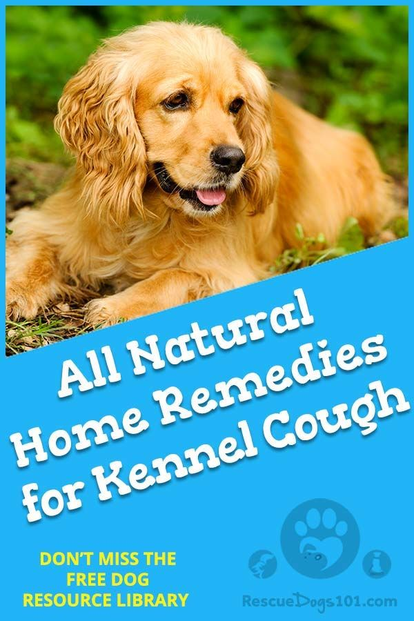 Easy And Natural Home Remedies For Kennel Cough Safety And Pets