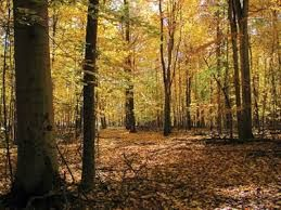Image result for woods