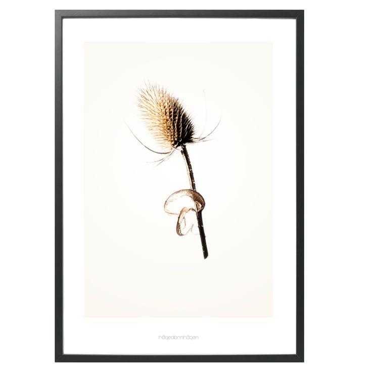 Hagedornhagen Art Print - 'Gold' Series #3