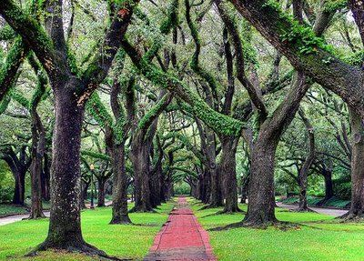 Image result for oaks alley south blvd houston texas
