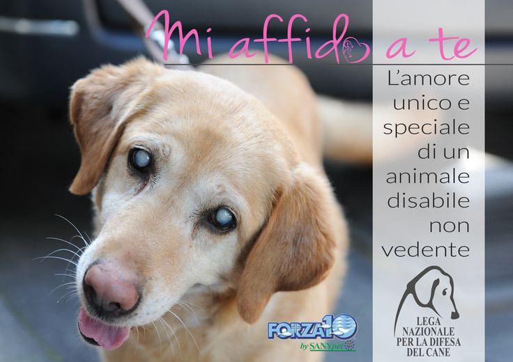 #MiAffidoaTe - la #campagna di #LegadelCane in collaborazione con #SanyPetForza10 per promuovere l'#adozione dei #cani #disabili