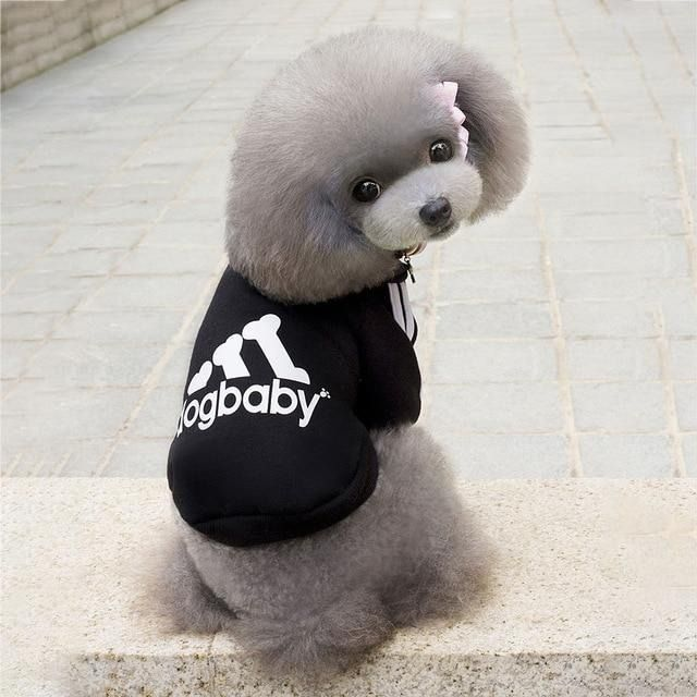 Hello This Sporty Tracksuit Is Now On Sale On Holybark Com Follow The Link And Learn More In 2020 Small Dog Breeds Dogs Dog Hoodie