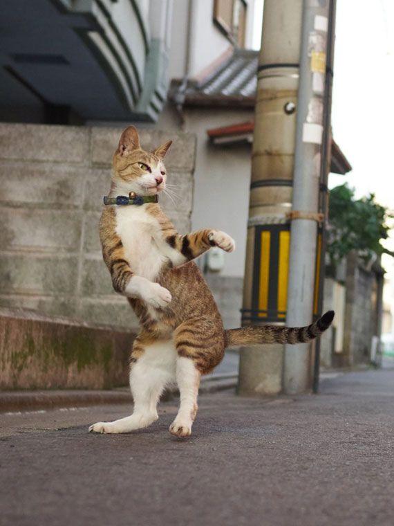 【ネコ好き必見】必殺拳炸裂!?ポーズがカッコイイ猫の写真集「のら猫拳」   ADB