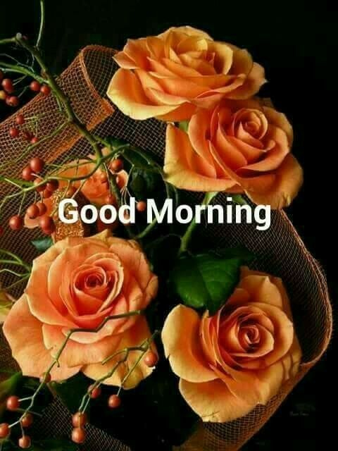 Pin by ARPITA JAIN on good morning wishes   Amazing