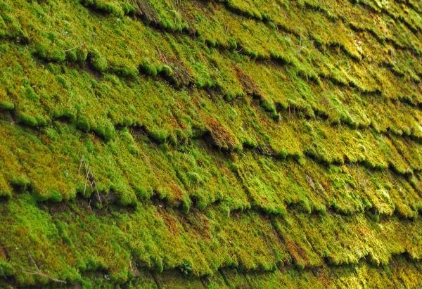 Mossy Wood Shingles By Terry Watts
