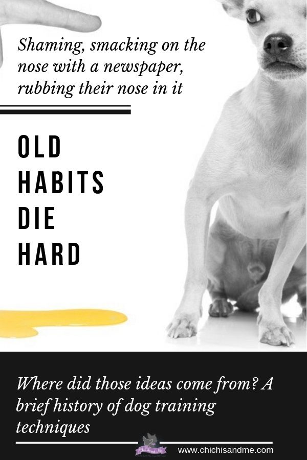 Title A Brief History Of Dog Training Dog Training Techniques