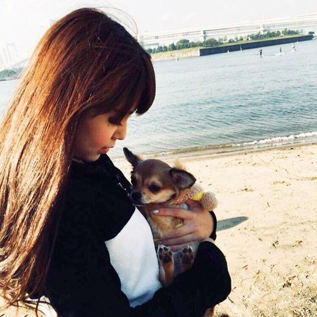 可愛い愛犬♡♡りあむくん🐶♡♡ 大好きなお姉ちゃんと一緒に、お台場海浜公園 をお散歩🌊はじめての砂浜にちょっぴり驚いてたけど、気持ち良かったね♡♡ #犬 #わんこ #チワワ #チワワ部 #愛犬 #子犬 #dog #ロングコートチワワ #茶色 #フォーン #お台場海浜公園 #海 #砂浜 #お散歩 #Rady #ねねちゃん