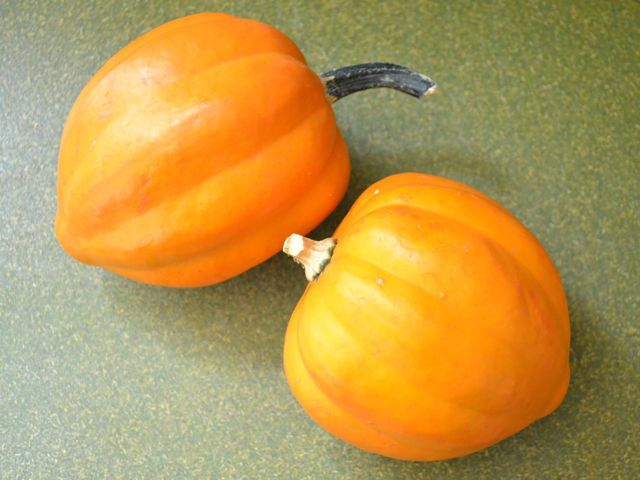 Squash Seeds - GOLDEN ACORN -  Nutty Flavored Yellow Flesh - Gmo Free - 10 Seeds #theseedhouse