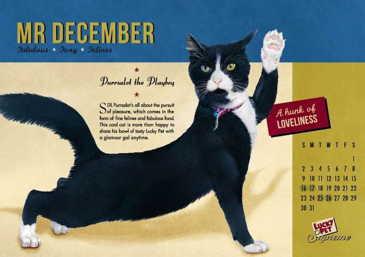 Whimsical Cat - Designer Nicole Marie used her creative skills and adorable felines as model to create this magically whimsical cat calendar for 2016.   The calend...