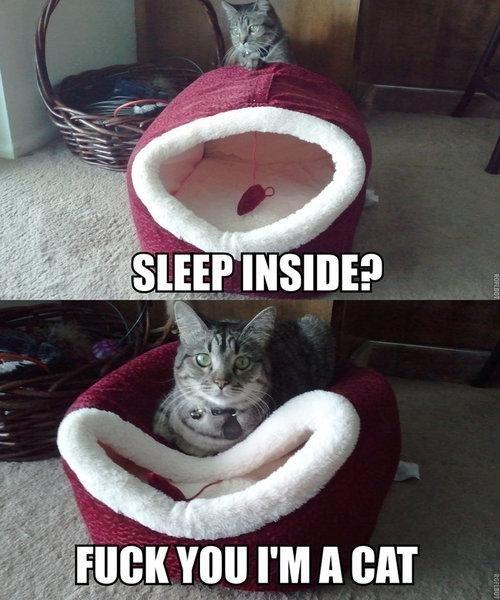 I'm a cat.Cat Beds, Laugh, Sleep Inside, Funny Cat, Cat Logic, Funny Stuff, Humor, Kitty, Animal