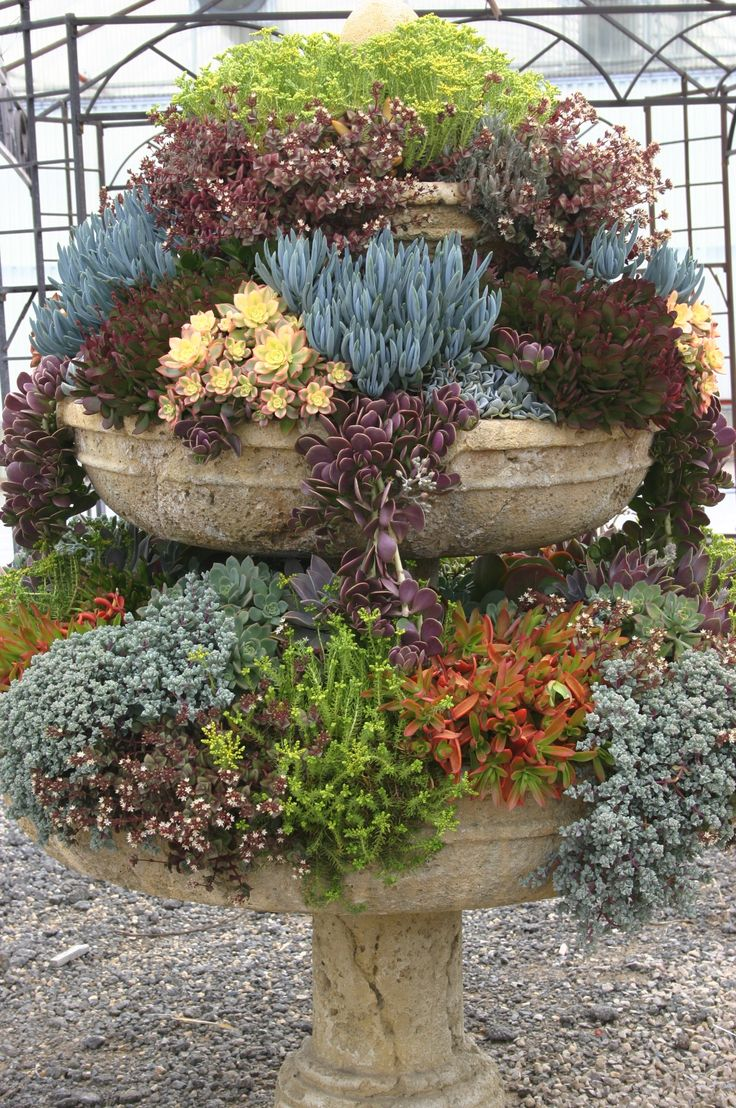 39 succulent container gardens 39 some design guidance for low water landscapes in miniature - Succulent container gardens debra lee baldwin ...