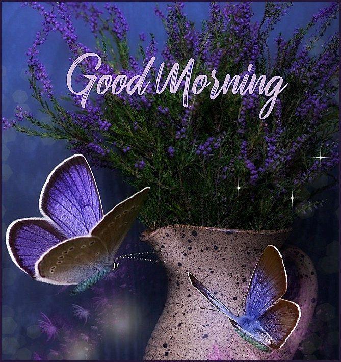 Purple Butterflies Good Morning Butterflies Purple Beautiful Good Morning Quotes Good Morning Animation Good Morning Cards Good Morning Greeting Cards