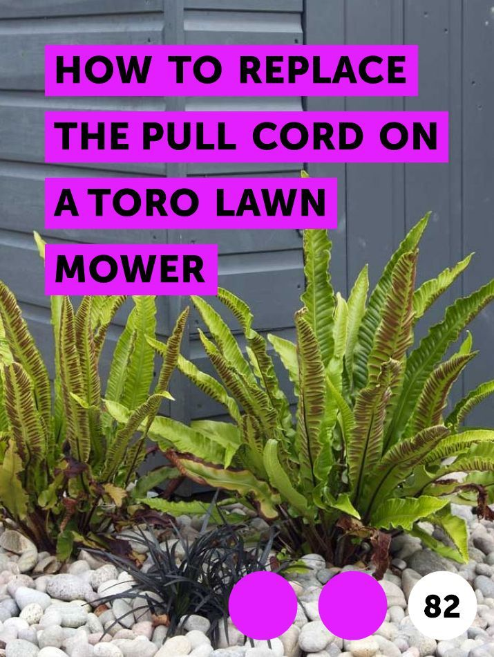 How To Replace The Pull Cord On A Toro Lawn Mower Hydrangea Not Blooming Average Cost Of Landscaping Fruit Trees