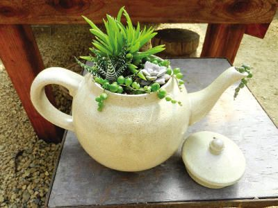 """""""Tiffany Polli of Succulent Gardens created this little teapot container with the top overflowing with jewel-like plants of several species and its spout spilling over with 'tea' [Senecio rowleyanus String of Pearls] (Sharon Hull/Special to the Sentinel)"""" ~ I just love this."""