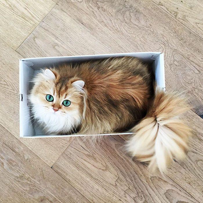 Ce magnifique chaton a un pelage luxueux et des yeux verts hypnotiques. Avec des airs de duchesse et des positions de princesse, ce petit chat sait prendre la lumière comme nous le montre son Instagram aux 10...