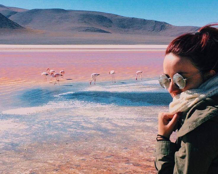 """""""Flamingos na Lagoa colorida. #lagunacolorada"""""""