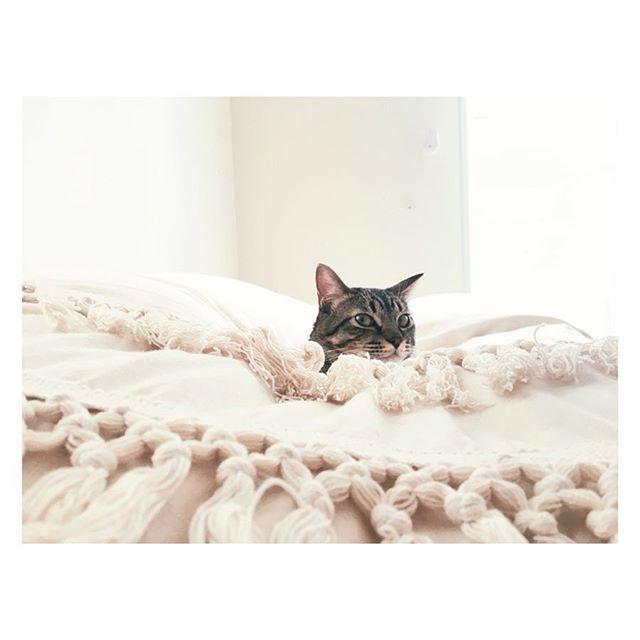 仔猫の時に会ったことがあるお客さんみんなに巨大化を驚かれる日々。 只今ほんのちょっとダイエット中です。 #私の誕生日にちゅーるを下さる皆さんには感謝 #ダイエット中 #猫 #キジトラ#cat #catlovers #cats #catstagram #愛猫 #petsagram #僕は男の子だけど名前はザジ