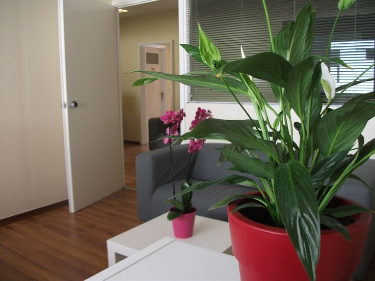 A few natural touches that make the difference in our work spaces!