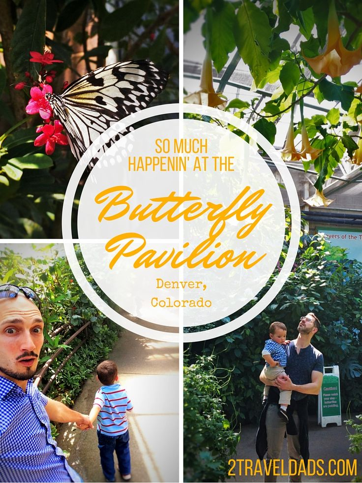 There's so much happenin' at the Butterfly Pavilion in Denver, Colorado. Bees, horseshoe crabs, butterflies, tarantuas... 2traveldads.com