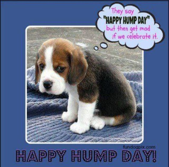 wednesday hump day photos | Here's a Hump Day (Wednesday) funny for everybody, feel free to ...