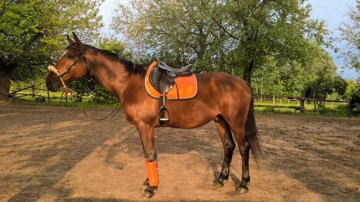 Bosal  Orange FGZ Saddle Pad + Busse Bandages Orange