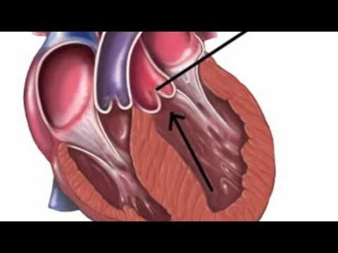 """This video shows how the blood flows through your heart. To the tune of Bruno Mars """"Just The Way You Are"""".    The lyrics are posted in """"my channel"""" under the """"comments"""" tab. Thanks!"""