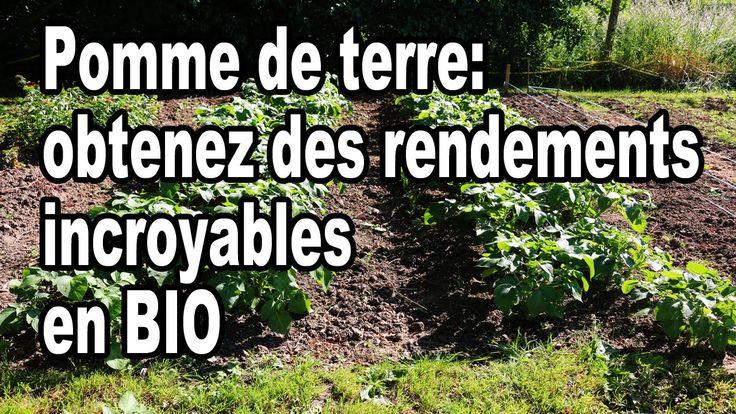 Comment planter des pommes de terre: Obtenez des rendements incroyables ...