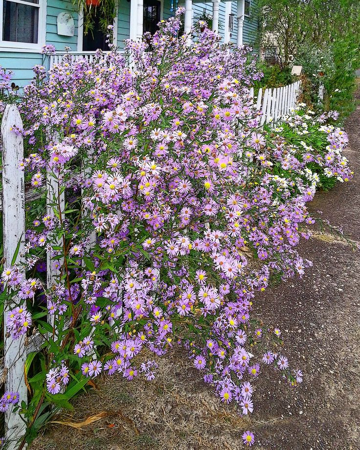 1000+ Ideas About Tall Purple Flowers On Pinterest