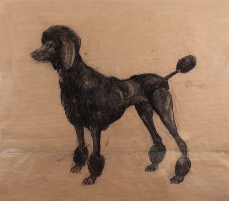Unitled (Poodle 2) by  Nicola Hicks. Charcoal on brown paper.