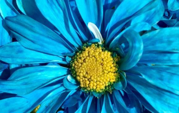 Fotos de flores que les dieron reconocimiento a sus fotógrafos