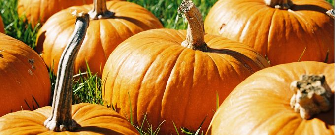 Pumpkin Recipes: Pumpkin Recipes, Recipes Halloween, Kids Events, Cooking Pumpkin, Kids Crafts, Easy Recipes, Halloween Kids, Crafts Milford, Things Pumpkin