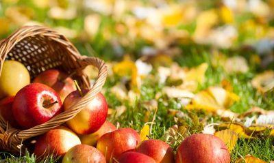 еда природа яблоки листья трава