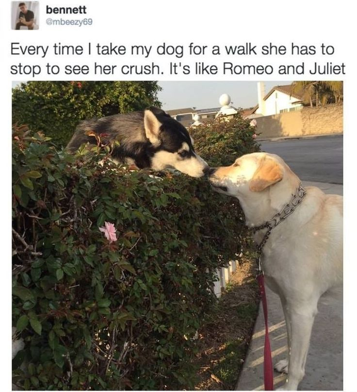 Today's Most Funny Memes (#274)