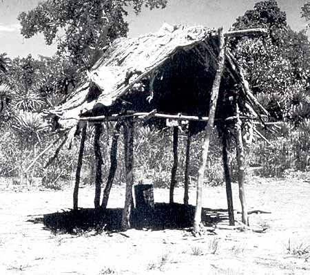 Aboriginal Technology -   This house, which features a platform, was built as a shelter from wet weather. Source: Aboriginal Technology: Housing, Alex Barlow, Macmillan Education Australia (1994)