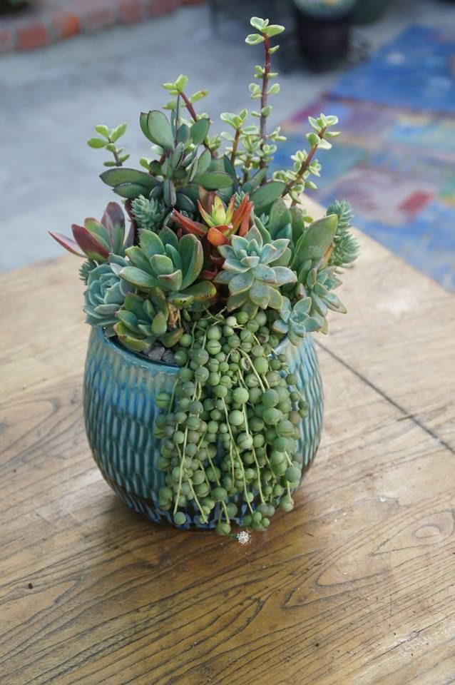 Succulent arrangement by Simply Succulent https://www.facebook.com/pages/Simply-Succulent/222665291108990