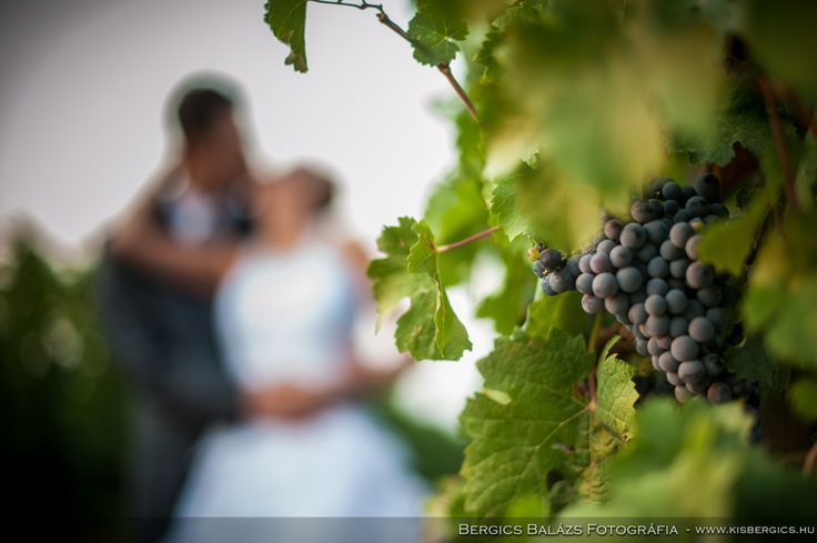 Wedding photoshot at Mokos Winery's wineyard