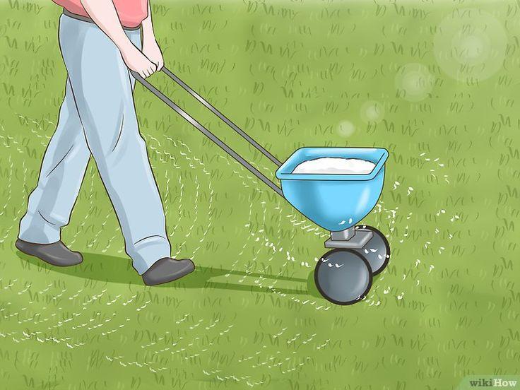 Get rid of grubs japanese beetles grubs lawn maintenance