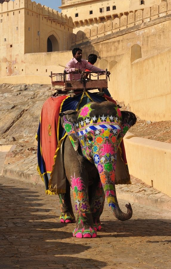 An india elephent has finished carriring a touist from foot of the hill to Amber fort and now she returns back to rest.İndia By Alika