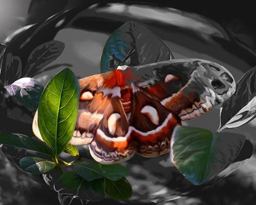 """""""As Daylight Ends"""" - Cecropia Moth Painting"""